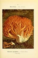 champignons (29)