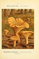 champignons (28)