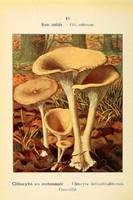 champignons (31)