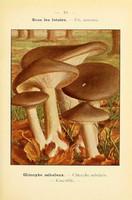 champignons (33)