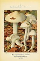 champignons (38)
