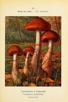 champignons (35)