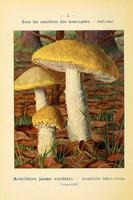 champignons (37)