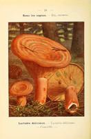 champignons (40)