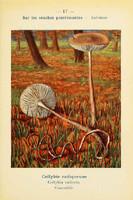 champignons (34)