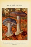 champignons (36)