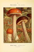 champignons (42)