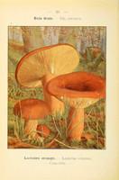 champignons (41)
