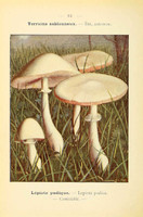 champignons (43)