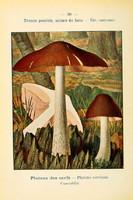 champignons (49)
