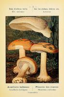 champignons (44)