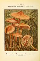 champignons (45)