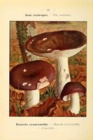 champignons (52)