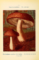 champignons (56)