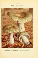 champignons (54)