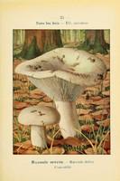 champignons (53)