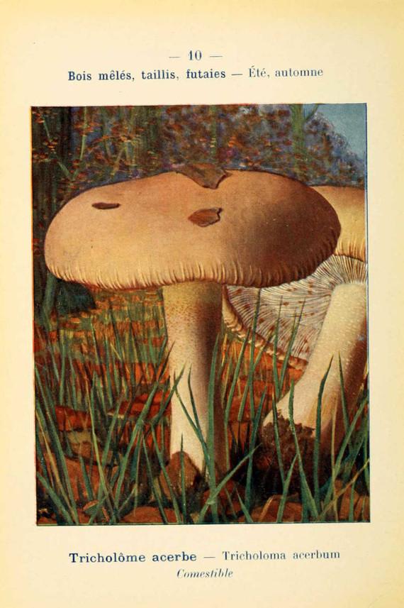 champignons (55)
