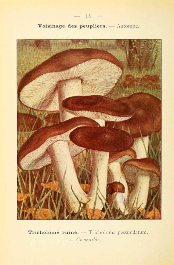 champignons (59)