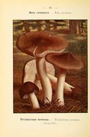 champignons (61)