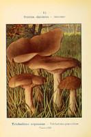 champignons (58)