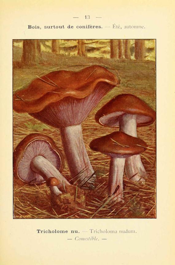 champignons (57)