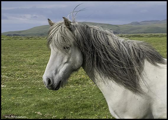 Islande (12)