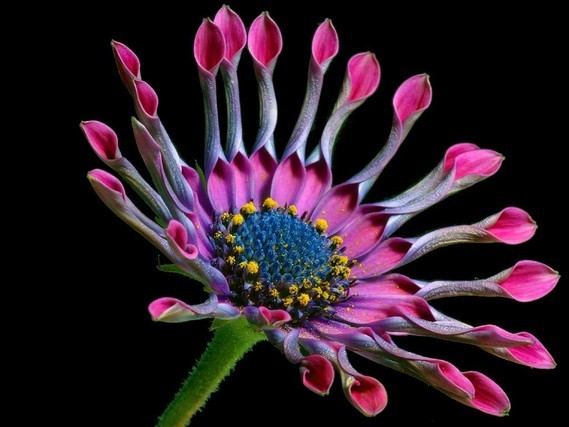 Fleurs_HD (11)