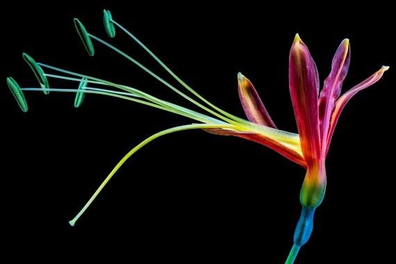 Fleurs_HD (17)