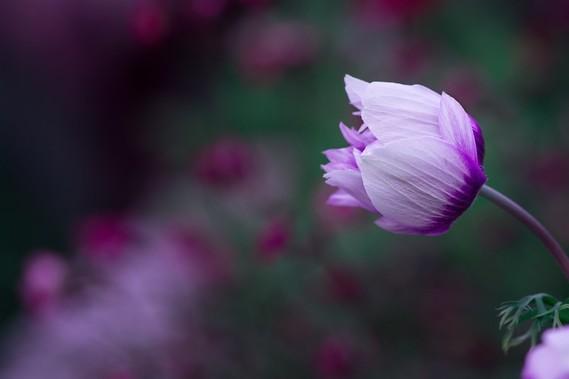 Fleurs_HD (12)