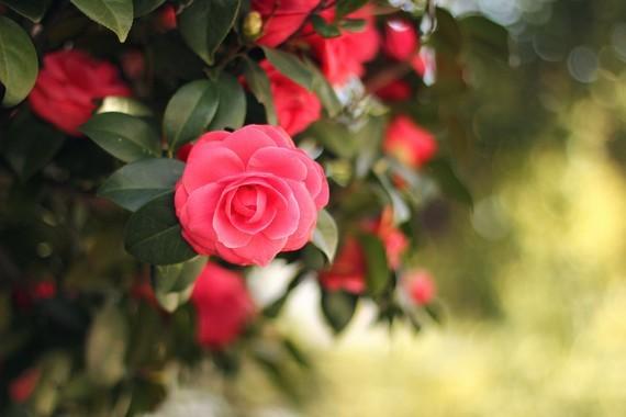 Fleurs_HD (36)