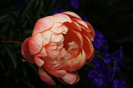 Fleurs_HD (35)