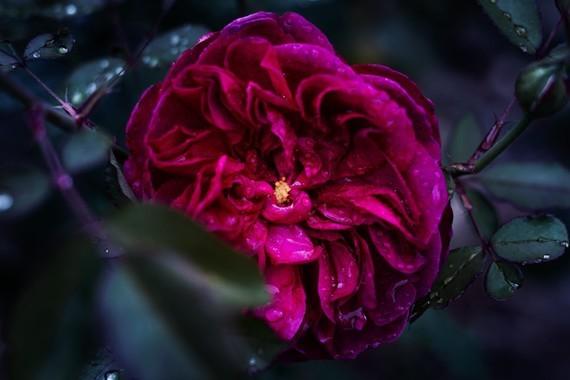Fleurs_HD (37)