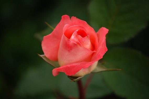 Fleurs_HD (45)