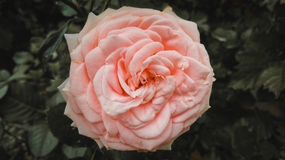 Fleurs_HD (40)