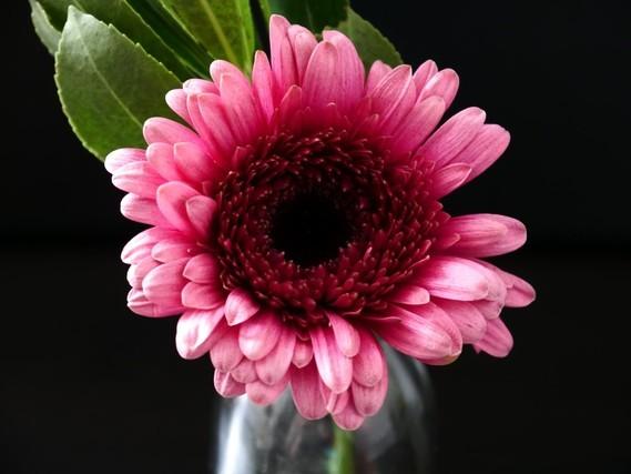 Fleurs_HD (43)