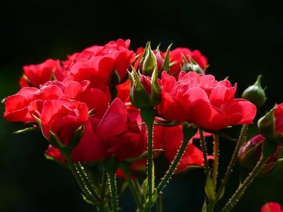 Fleurs_HD (48)