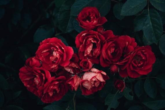Fleurs_HD (41)