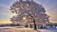 winter2 (14)