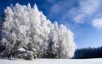 winter2 (27)
