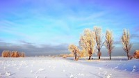 winter2 (31)