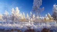 winter2 (32)
