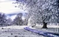 winter2 (12)