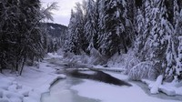 winter2 (44)