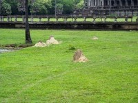 Angkor5 (50)
