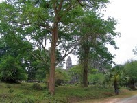 Angkor2 (16)