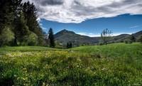 Auvergne (60)
