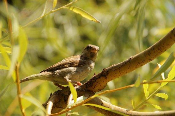oiseau sur branche_Small