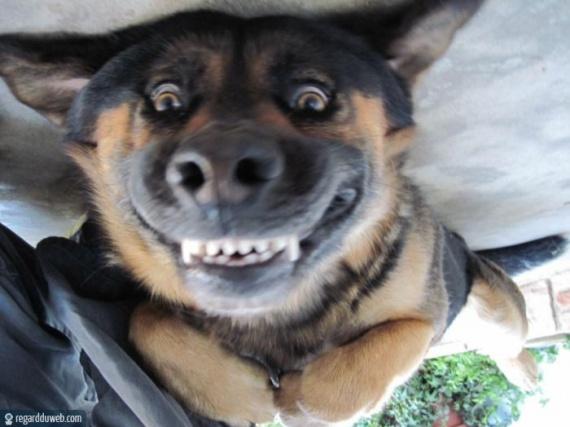image drole sourire