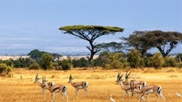 djembe-paysage-africain-la-savane-nature-photo-hd-fonds-d-cran-pour-356490
