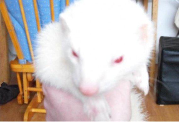 Pierrot (2)